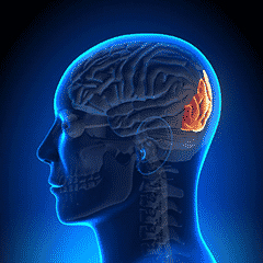 What is Occipital Nerve Stimulation?